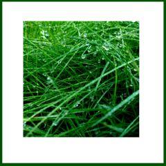 nature grass green beadsdew