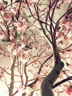 mindshift day255 disney cherryblossom flowers