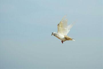 bird nature photography