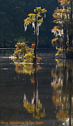 bayoukayaker photography summer nature