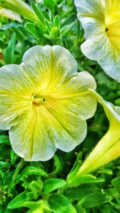 flower flowers photography cute yellow