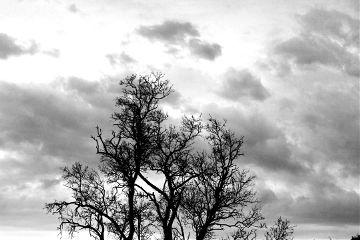oldphoto photography winter tree