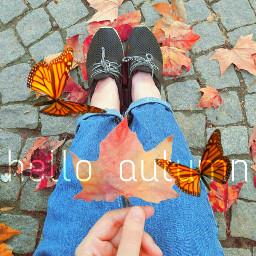 freetoedit butterflies leaveschanging autumn autumncolors