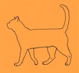freetoedit cat orange outline meow