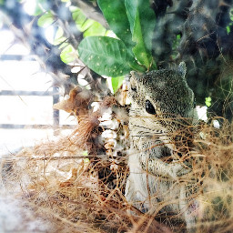 nature squirrel green cute photography freetoedit