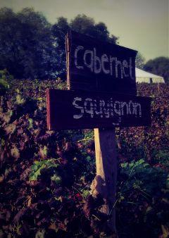 wine mytown farm