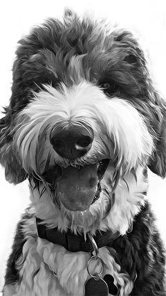 dog blackandwhite