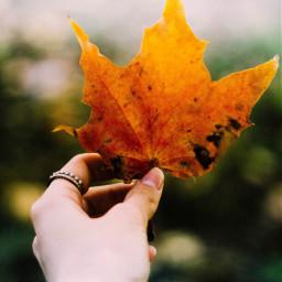 freetoedit leaves love california italy