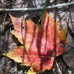 fall photography leaf