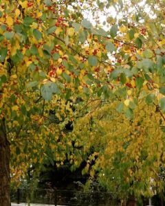 colorful autumn nature tree seasons