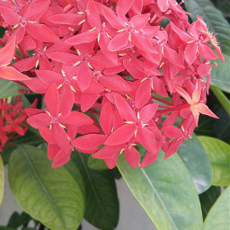 wppprimarycolors flower red green nature freetoedit