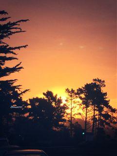 sunrise sky trees thismorning interesting