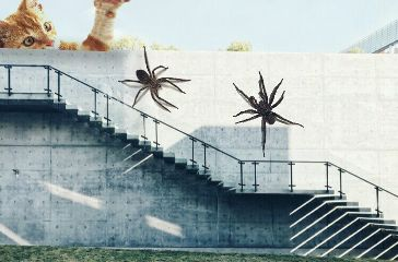 spiders cats wall staircase gaints freetoedit