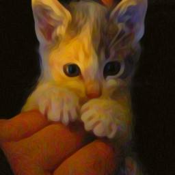 kitten kittenlove kittenplay kittenzcontest kittengirl freetoedit