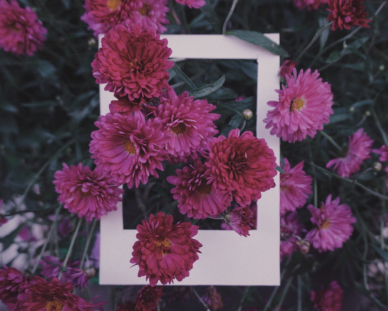 October #dailyinspiration #polaroidinsoired #flowers