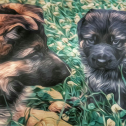 puppies my oldphoto myphotography myedit