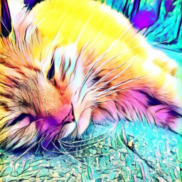wapmagiceffects cat colorfull collors freetoedit