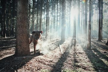 freetoedit dog nature misty