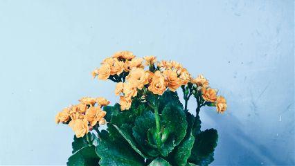 flowerslovers flower flowerphotography flowerarrangement orangeflower freetoedit