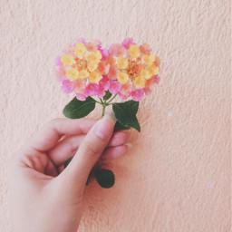 smallflowers colorful cute freetoedit