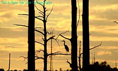 bayoukayaker photography nature petsandanimals
