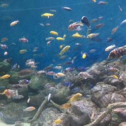 iran isfahan aquarium