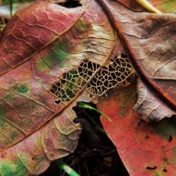 autumn leaves fall autumnleaves autumncolors