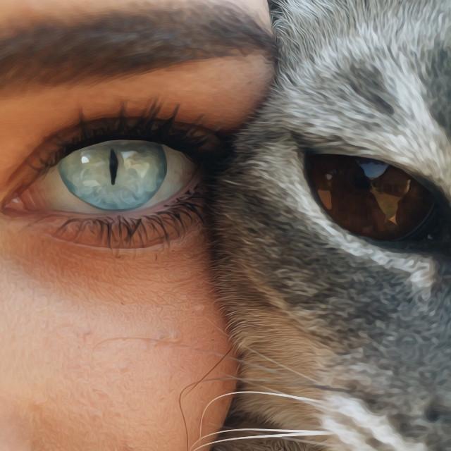 #cat #eye #girl #eyes #blueeyes #browneyes #blue #brown #oil #painting #oilpainting #interesting #art #nature #people #photography #edit