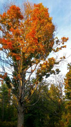 elizabethpark tree autumn garden