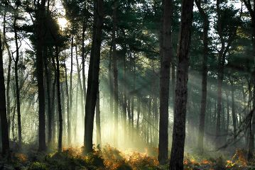 freetoedit nature photography forest mist