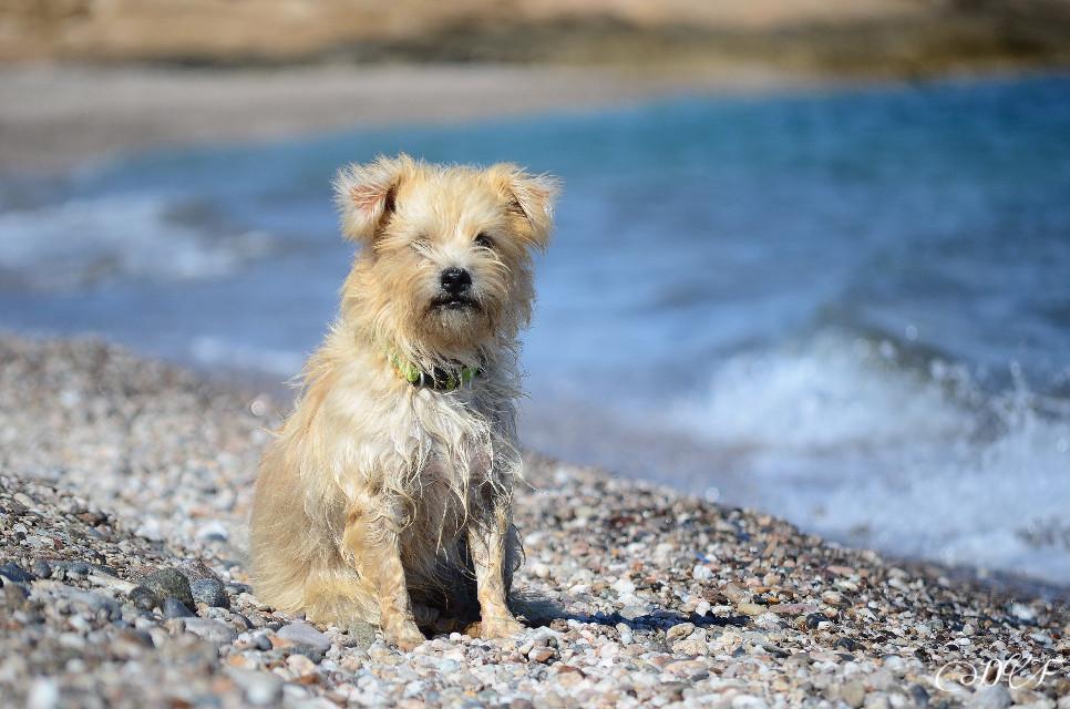 Tex💜#petsandanimals #dogs #cute #photography #sea #colorful