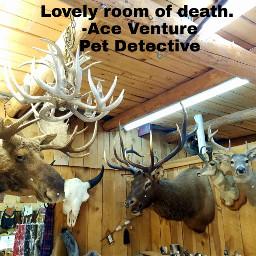 freetoedit deer deerhead deerheads southdakota