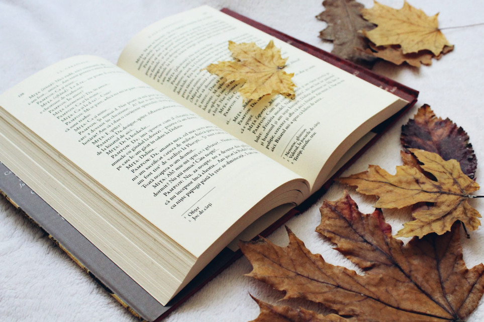 Enjoy the autumn!And thank you for 70k followers! #photography  #book  #leaves  #autumn  #autumncolors  #autumnvibes