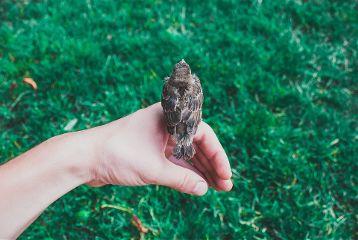 freetoedit hand human portrait bird