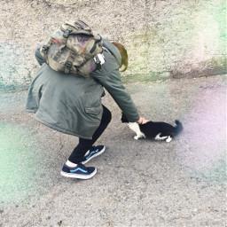 freetoedit cat friend catlover walk