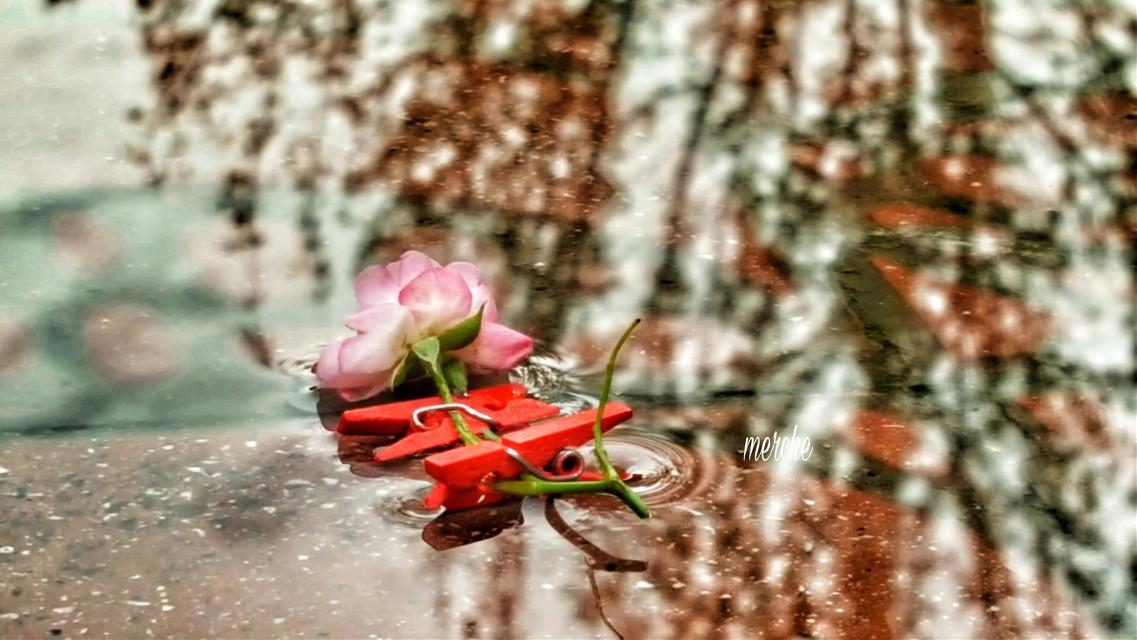 Amor por la fotografía..creando la foto.. #photography #flower #rain #hdr_edits