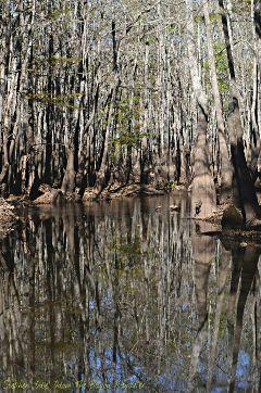bayoukayaker nature water