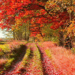 colorful nature photography autumn