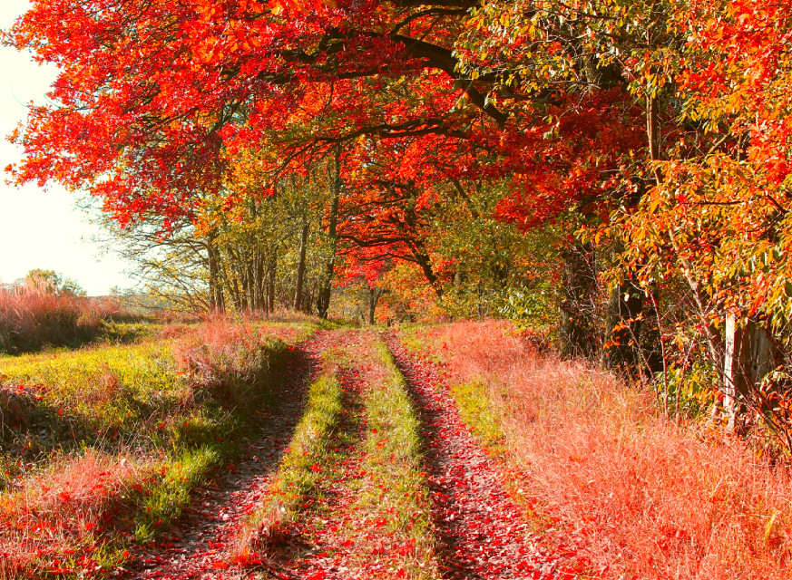 Autumn love... enjoy the fall everyone. ..  #colorful  #nature  #photography  #autumn