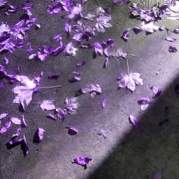 autumn leaves leavesontheground shadows hueadjust freetoedit