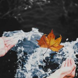 freetoedit reedited justbefree autumn
