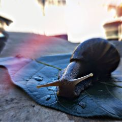 freetoedit nature snail photography