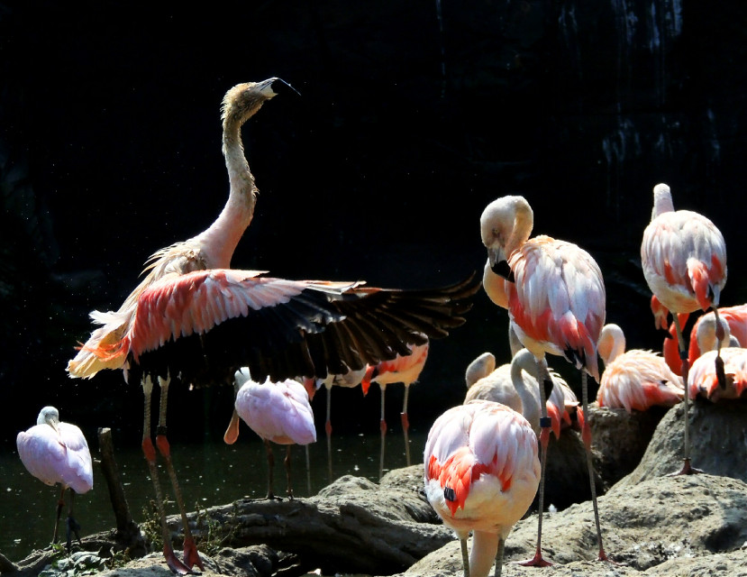 Frühsport    #Flamingo  #flamengo  #photography  #Fotografie  #Natur  #Bird  #Vogel