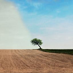freetoedit interesting farm tree split