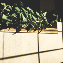 freetoedit photography window light sunlight