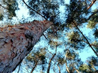 tree travel heaven nature blue freetoedit