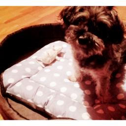 my new adopted doggy doglove