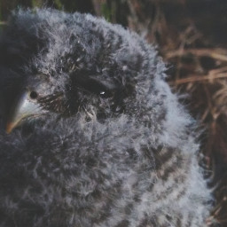 owl cute freetoedit